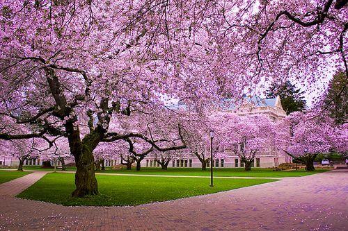 University of Washington - Best Online Master of Finance Degree Programs